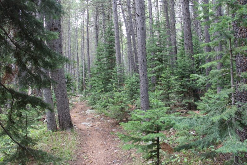 hiking the sourdough trail
